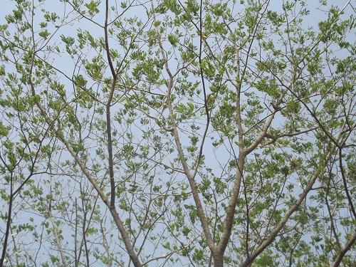 forest bhilwara