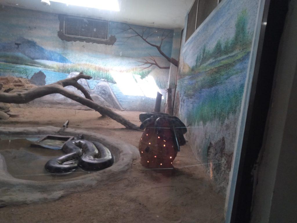 Zoo In Ahmedabad at kankaria lake