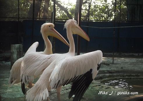 Wildlife photography Rajasthan