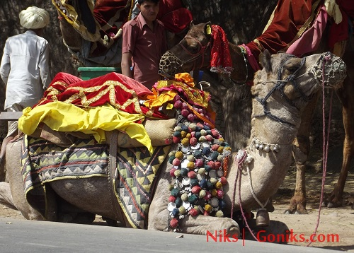 camel ride in udaipur