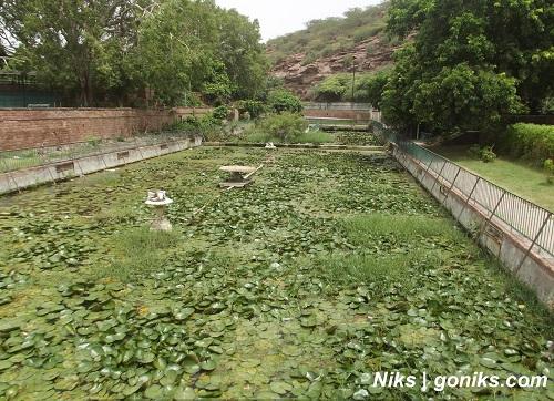 Lotus Pond in the garden