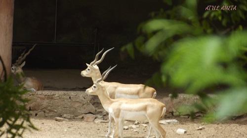 zoo at jaipur