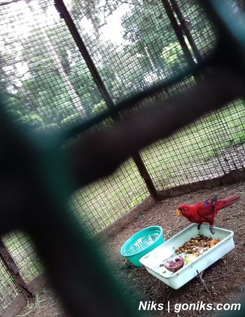 red parrot in kamla nehru zoo of indore